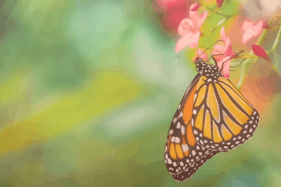 Cameron Highlands Butterfly Farm