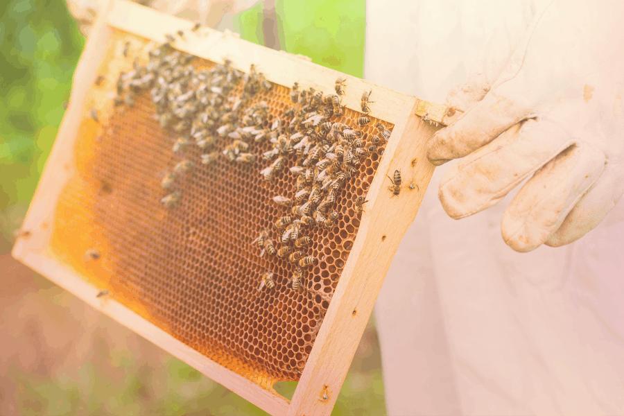 Ladang lebah madu di Cameron Highlands