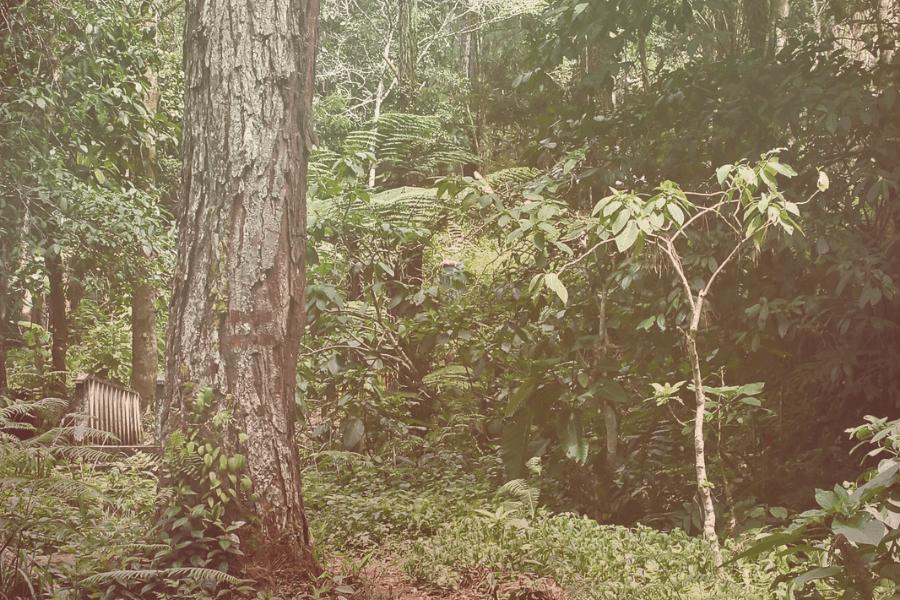 Langkawi Jungle Trekking