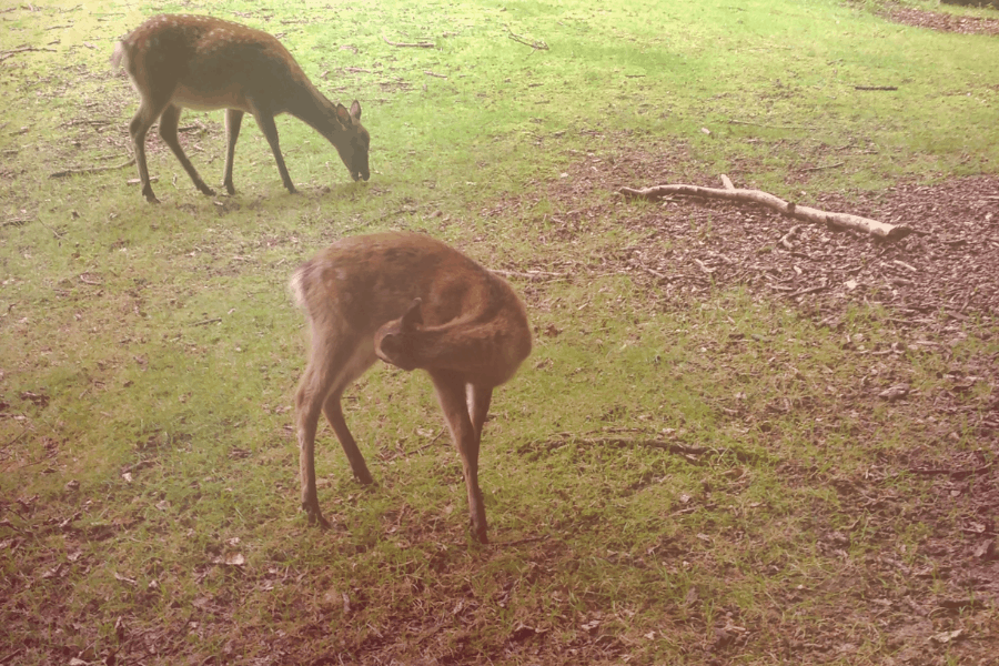 Temerloh Deerland Park