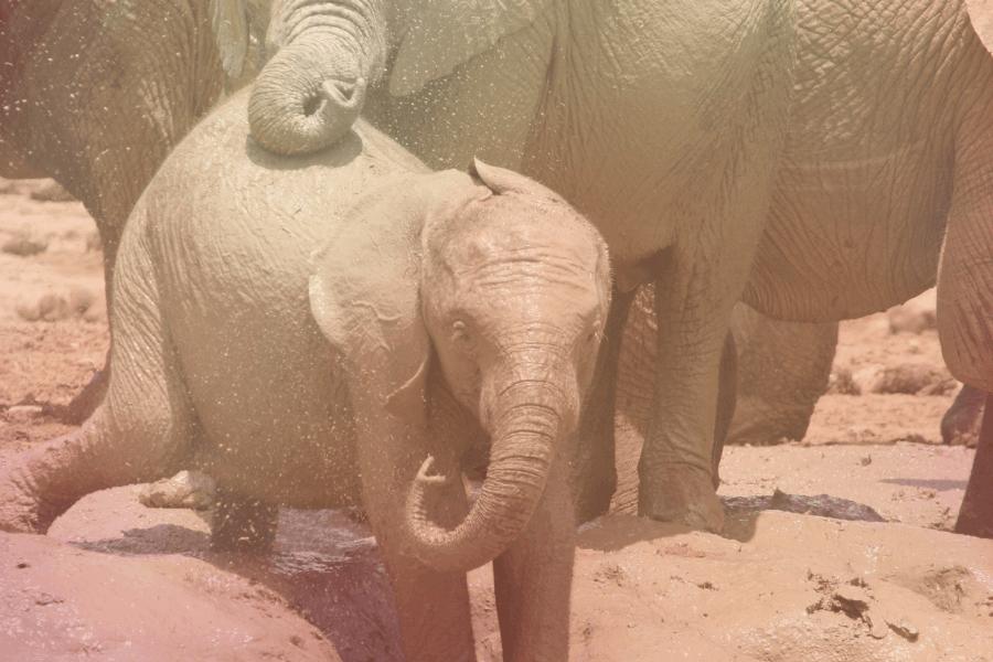 Pusat Konservasi Gajah Kebangsaan, Lanchang, Temerloh